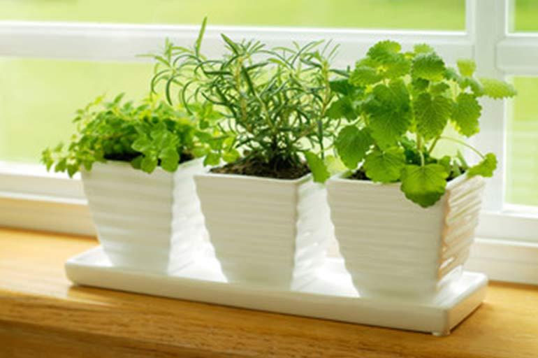 3 indoor plants on a windowsill
