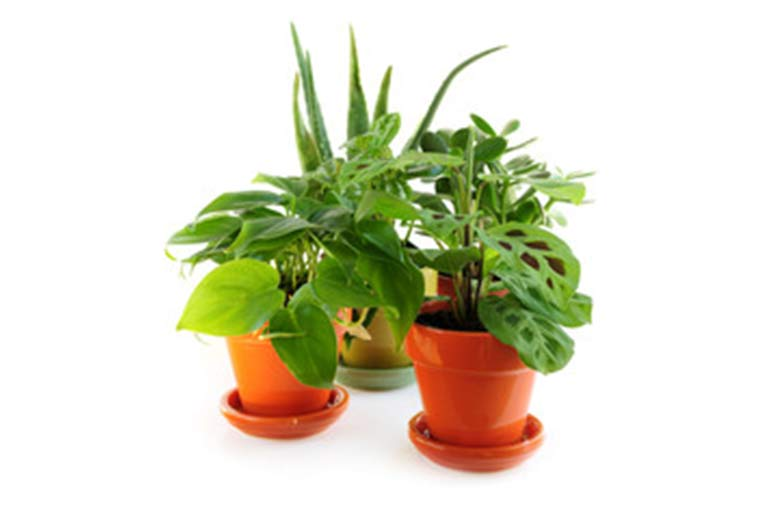 different indoor potted plants