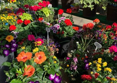 garden house flower sets